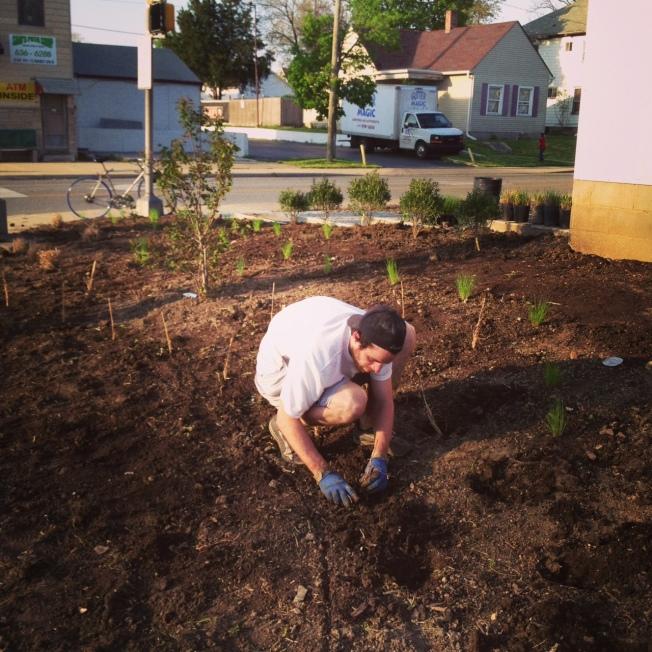 Planting Plugs