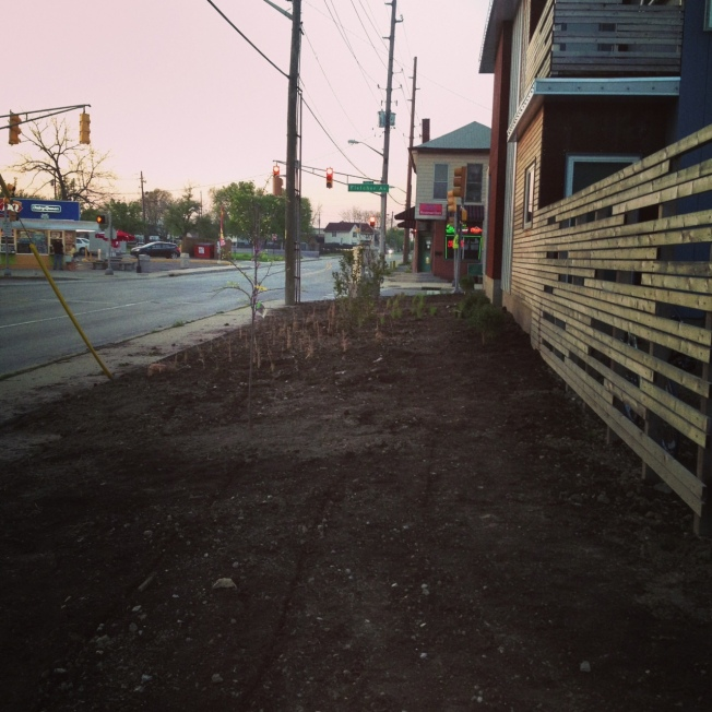 Plantings along Shelby